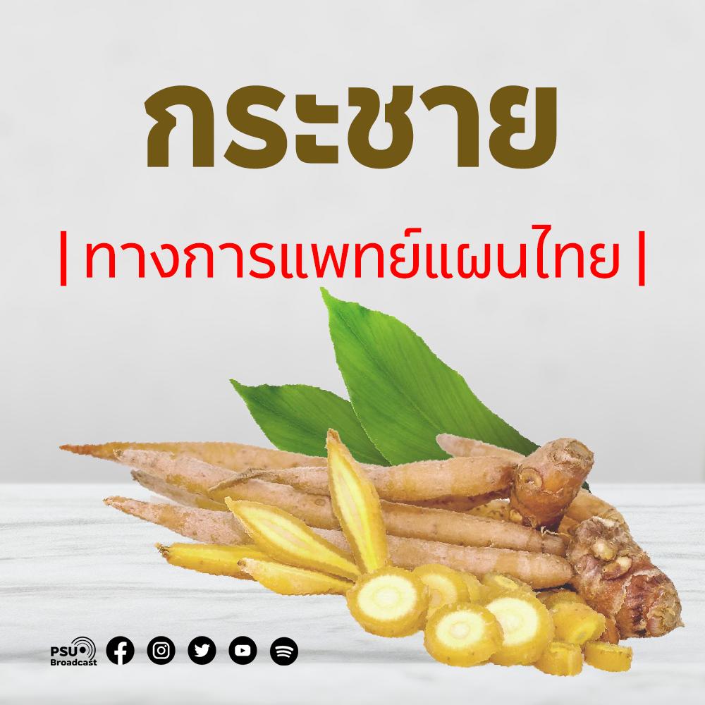 กระชาย : ทางการแพทย์แผนไทย